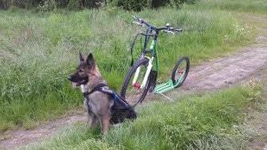 Emmi, Altdeutscher Schäferhund. Sie zieht den Dogscooter so gern.